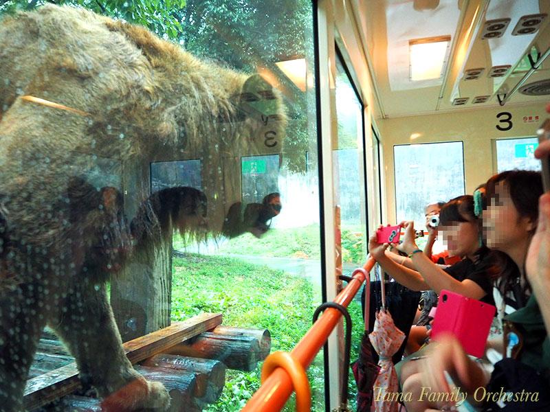 多摩動物公園ライオンバスでの写真